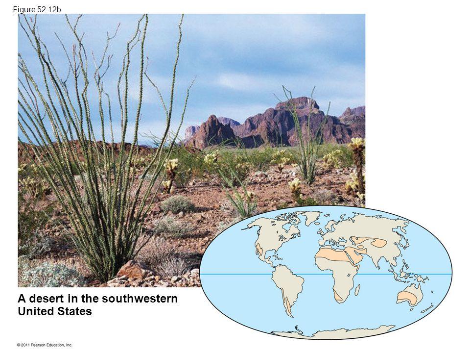 A desert in the southwestern United States Figure 52.12b