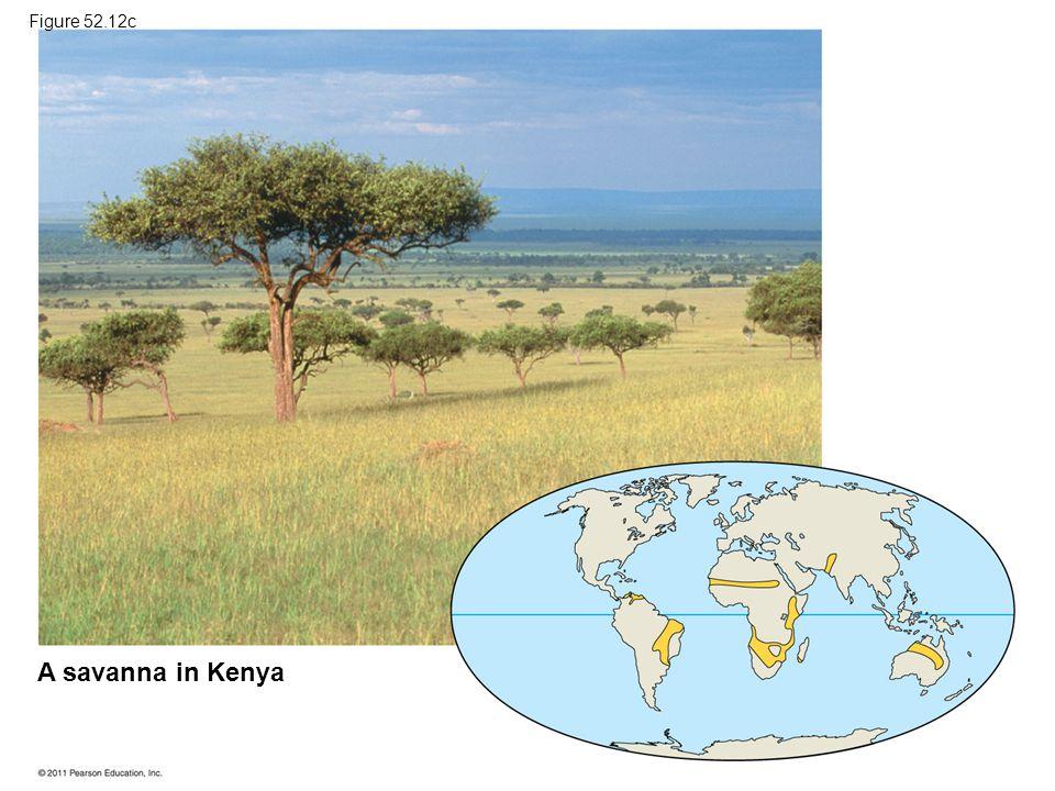A savanna in Kenya Figure 52.12c