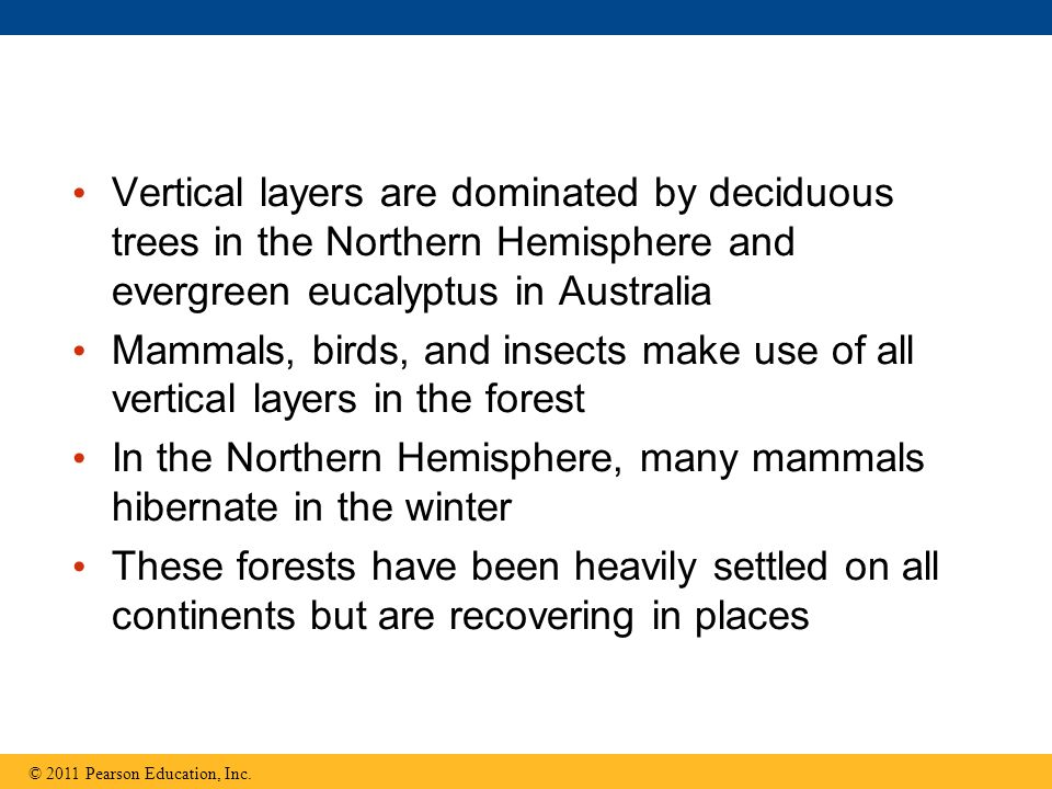Vertical layers are dominated by deciduous trees in the Northern Hemisphere and evergreen eucalyptus in Australia Mammals, birds, and insects make use