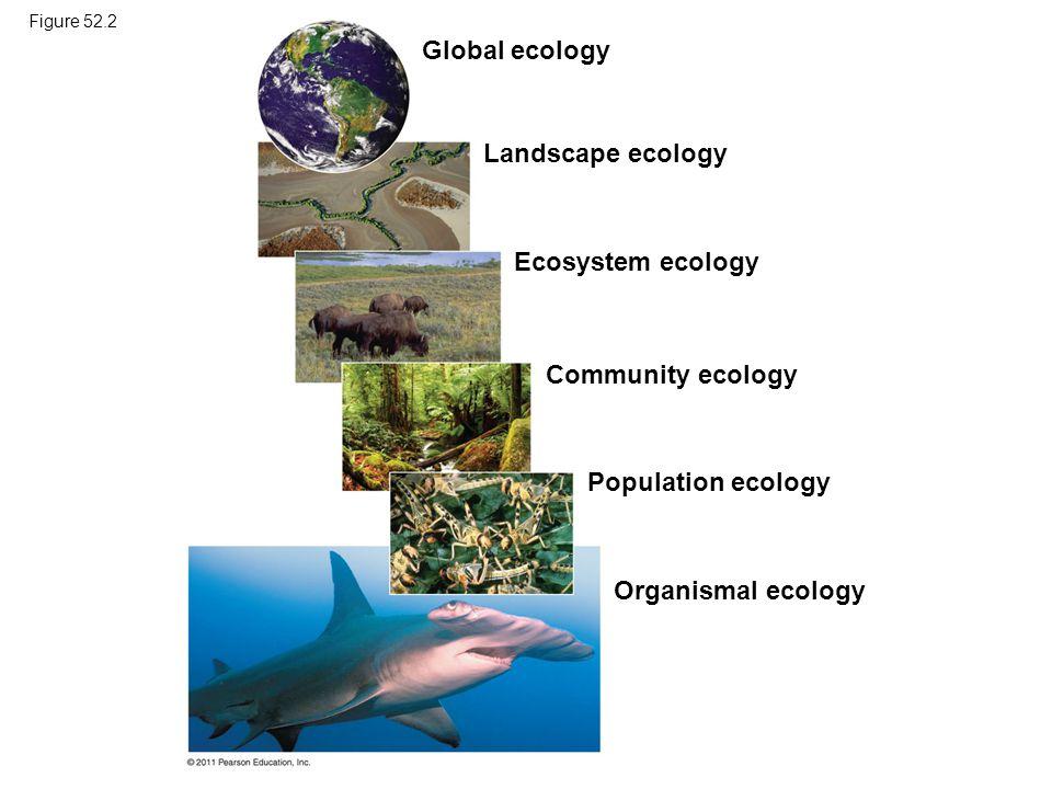 Figure 52.2 Global ecology Landscape ecology Ecosystem ecology Community ecology Population ecology Organismal ecology