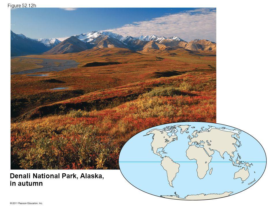 Denali National Park, Alaska, in autumn Figure 52.12h