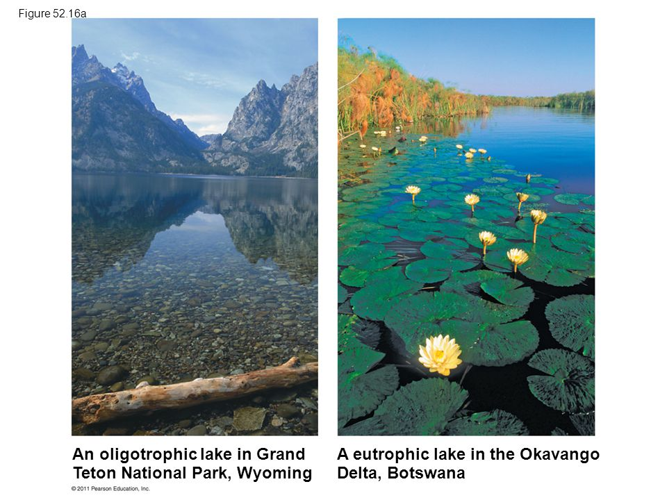 An oligotrophic lake in Grand Teton National Park, Wyoming A eutrophic lake in the Okavango Delta, Botswana Figure 52.16a