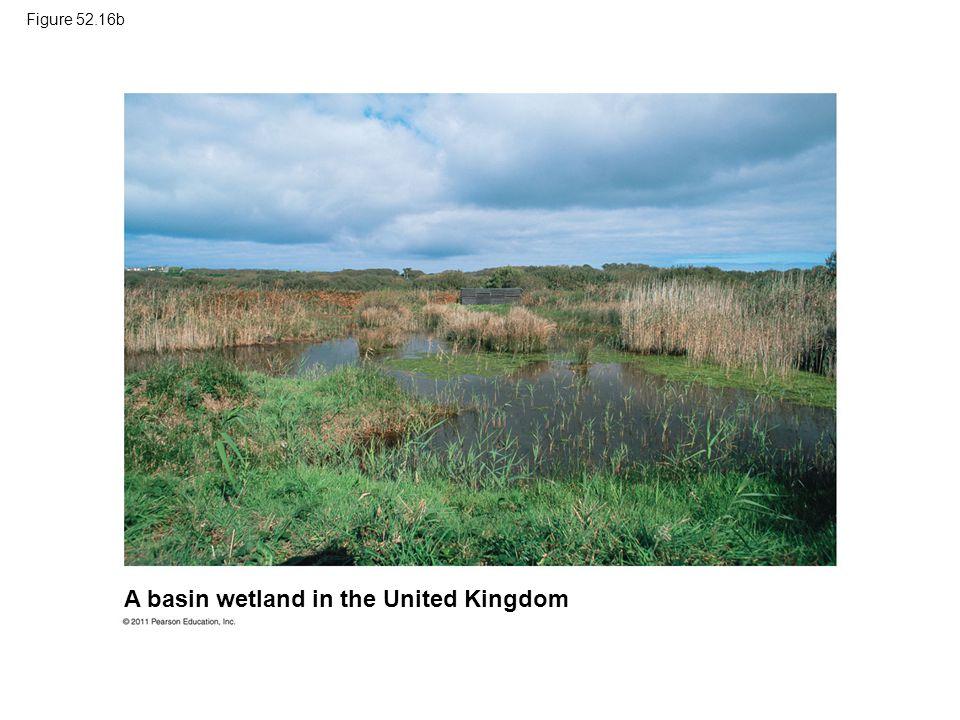 Figure 52.16b A basin wetland in the United Kingdom
