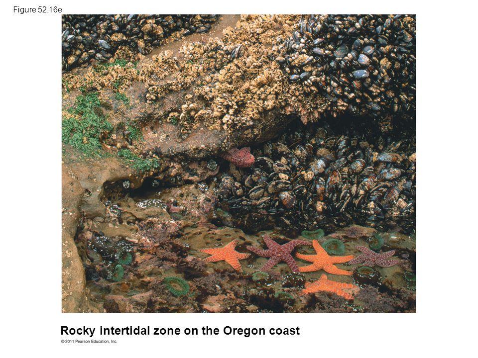 Rocky intertidal zone on the Oregon coast Figure 52.16e