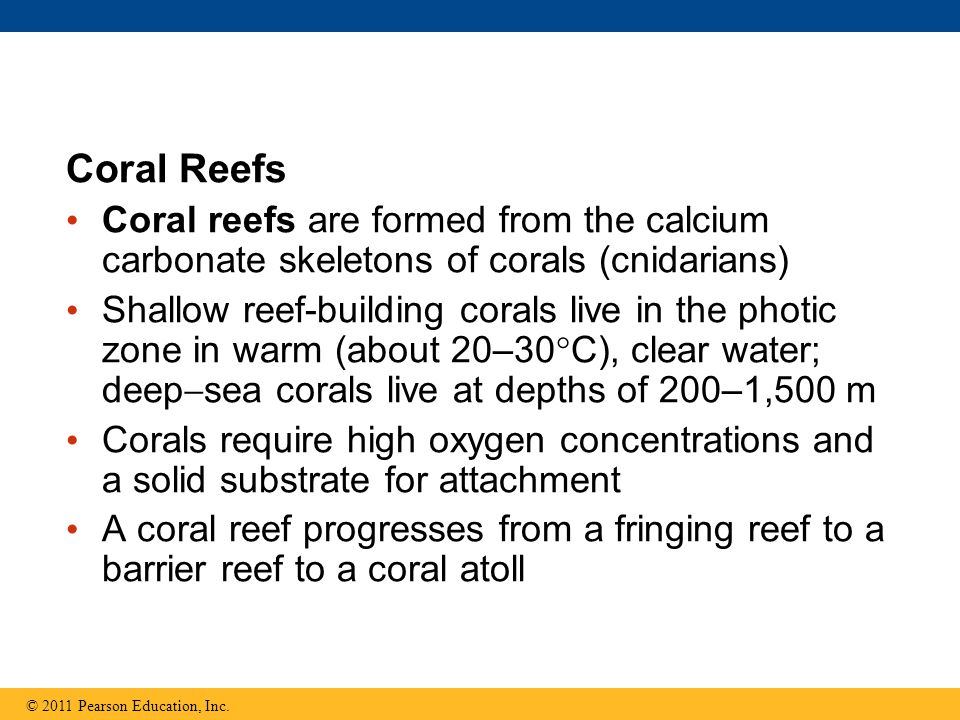 Coral Reefs Coral reefs are formed from the calcium carbonate skeletons of corals (cnidarians) Shallow reef-building corals live in the photic zone in