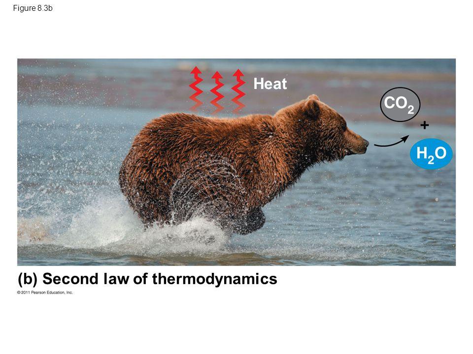 Figure 8.3b (b) Second law of thermodynamics Heat