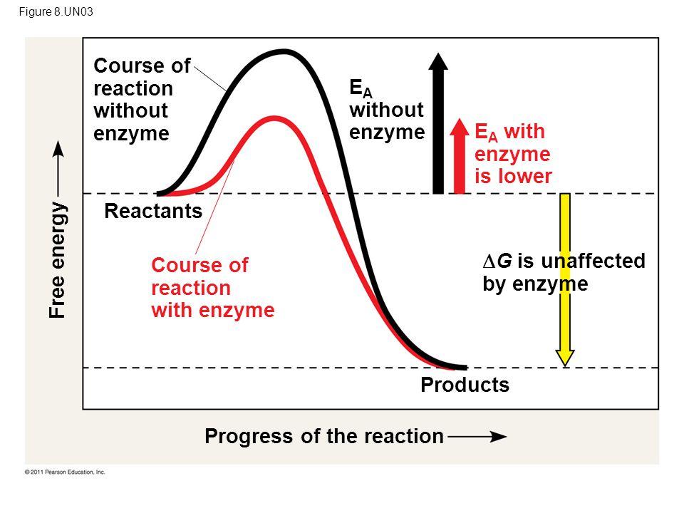 Figure 8.UN03 Course of reaction without enzyme E A without enzyme E A with enzyme is lower Course of reaction with enzyme Reactants Products  G is u