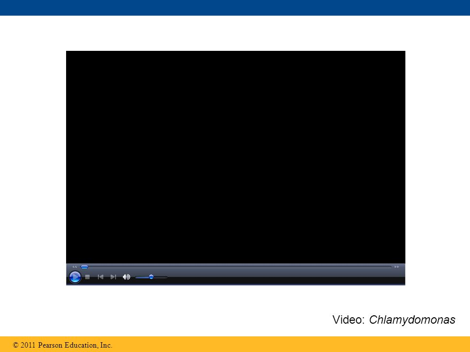 Video: Chlamydomonas
