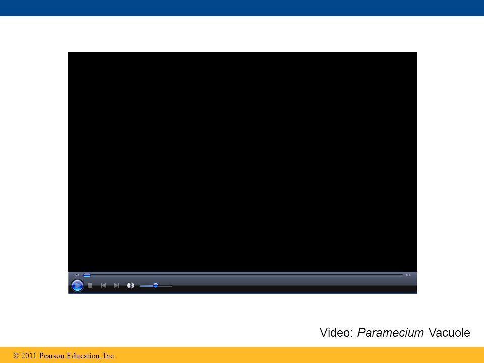 © 2011 Pearson Education, Inc. Video: Paramecium Vacuole