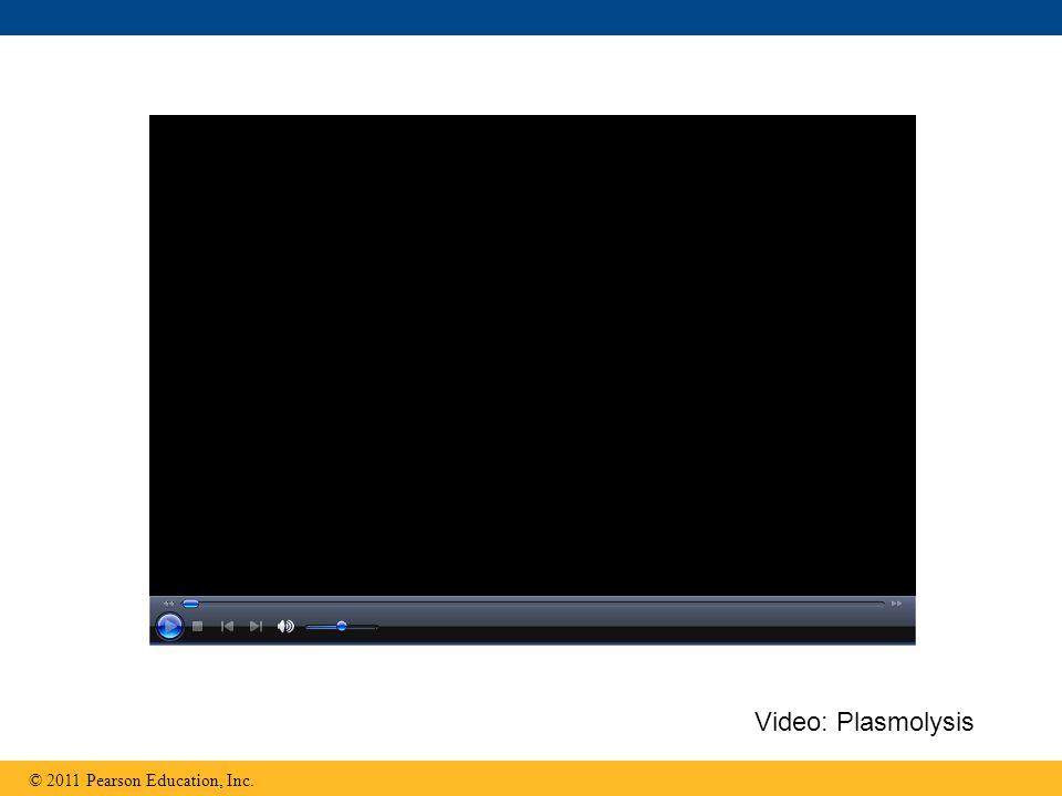 Video: Plasmolysis