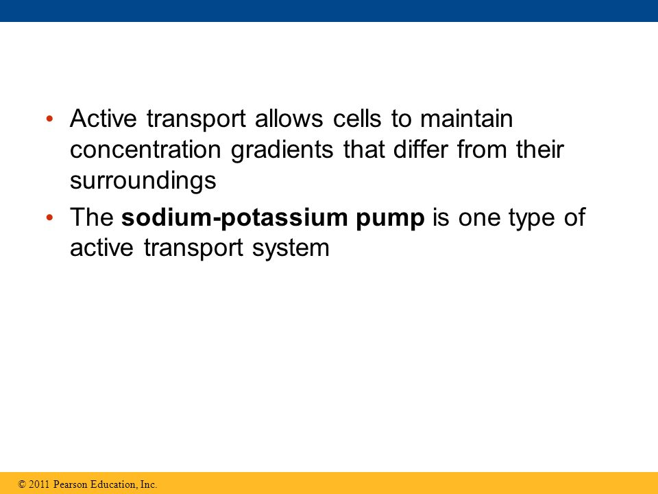 Active transport allows cells to maintain concentration gradients that differ from their surroundings The sodium-potassium pump is one type of active transport system © 2011 Pearson Education, Inc.