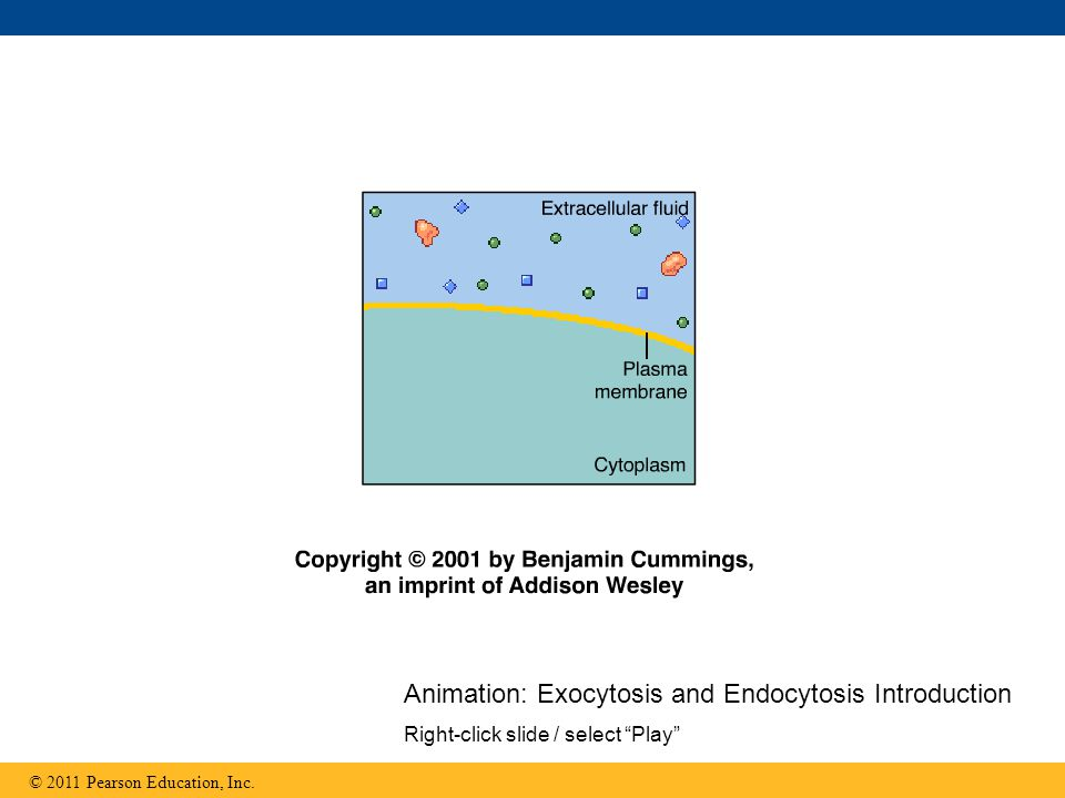Animation: Exocytosis and Endocytosis Introduction Right-click slide / select Play