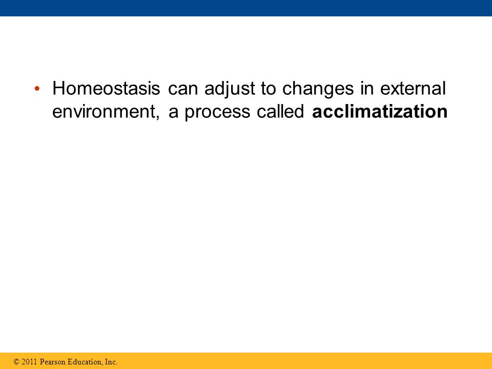 Homeostasis can adjust to changes in external environment, a process called acclimatization © 2011 Pearson Education, Inc.