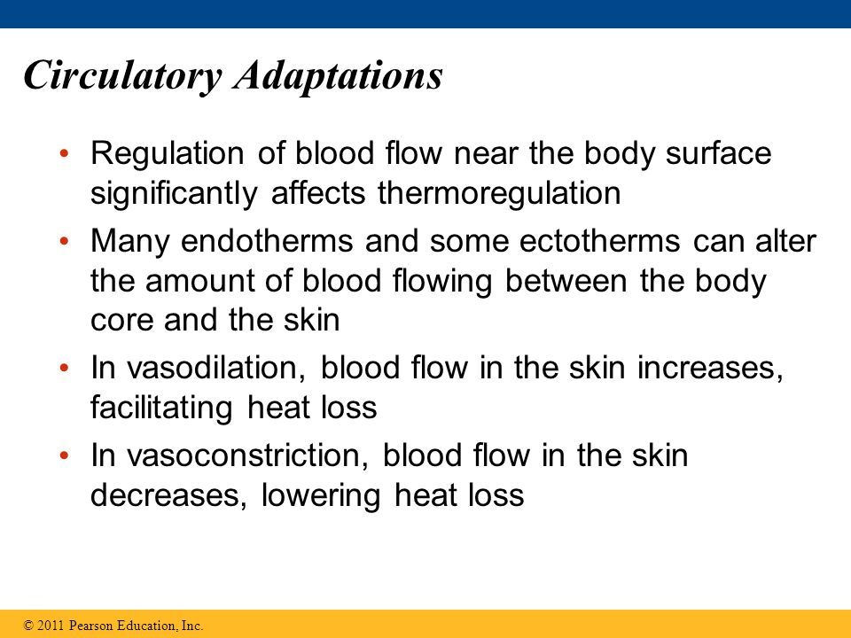 Regulation of blood flow near the body surface significantly affects thermoregulation Many endotherms and some ectotherms can alter the amount of bloo