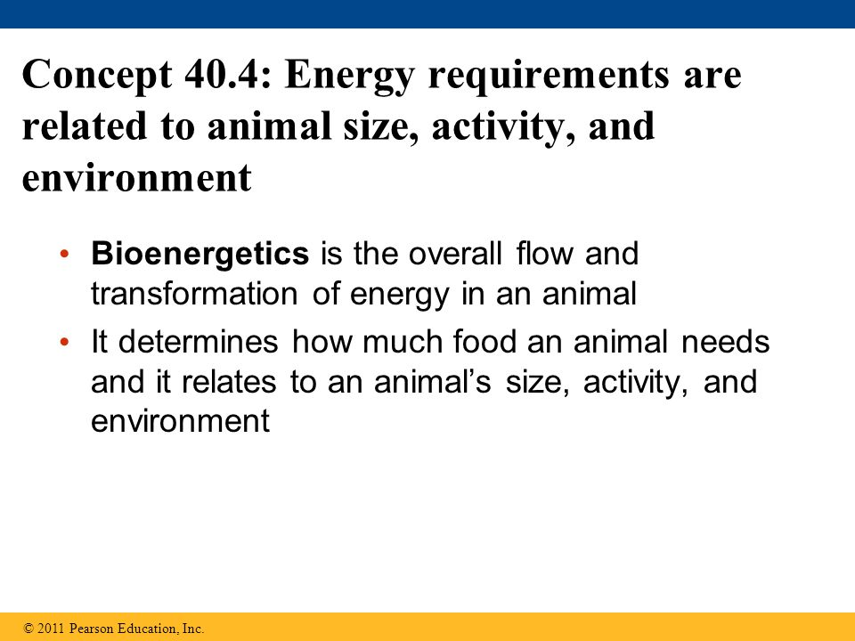 Concept 40.4: Energy requirements are related to animal size, activity, and environment Bioenergetics is the overall flow and transformation of energy