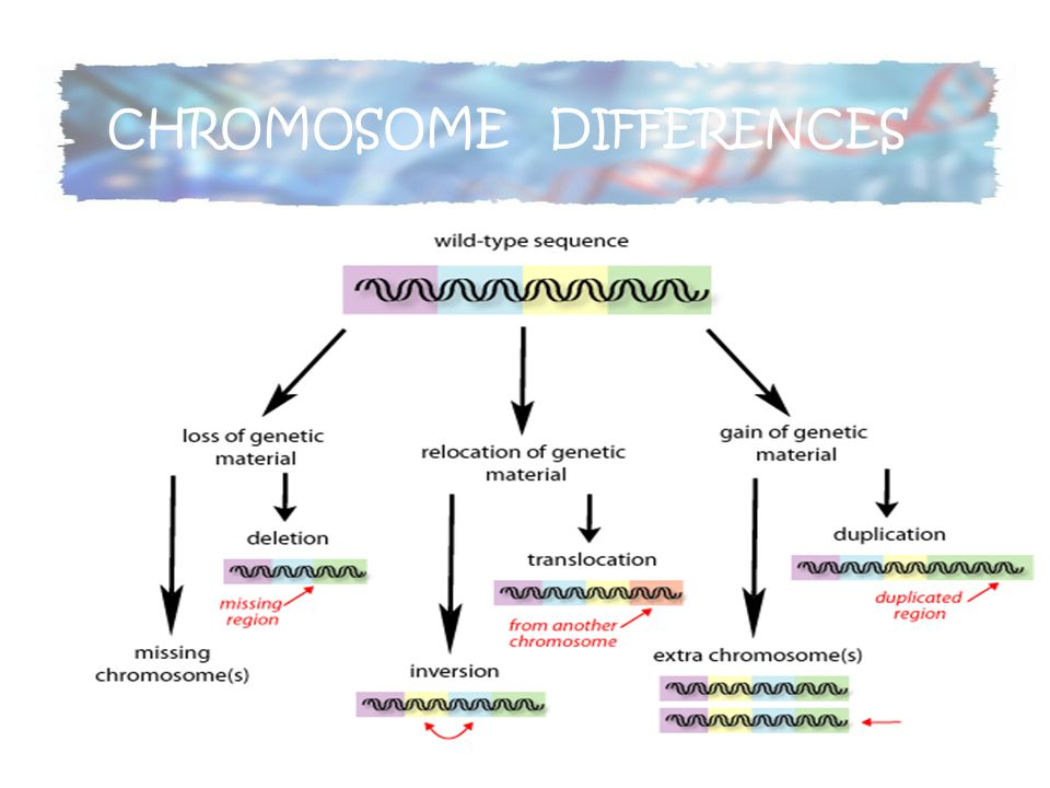 CHROMOSOME DIFFERENCES