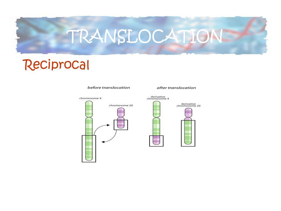 TRANSLOCATION Reciprocal