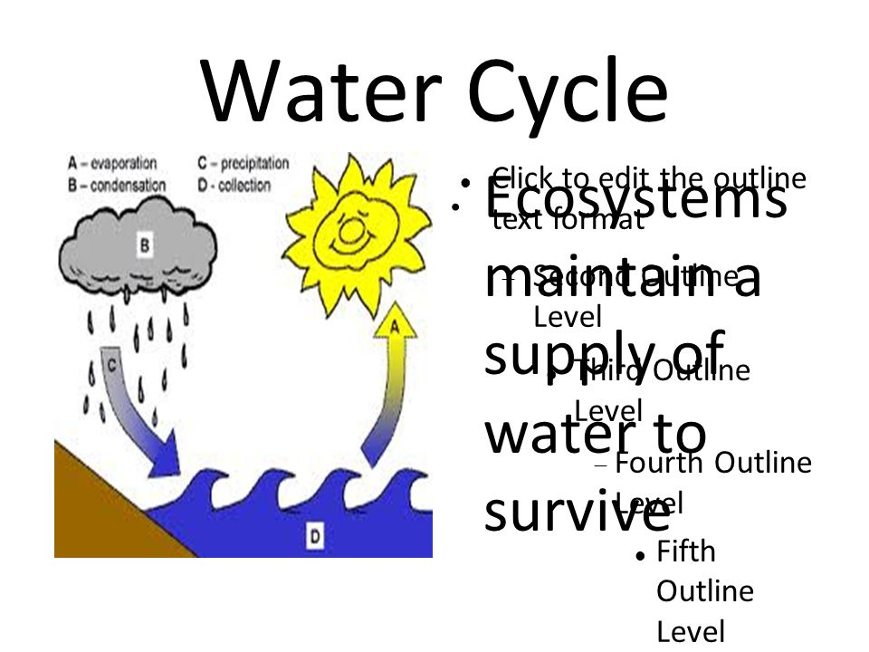 Click to edit the outline text format  Second Outline Level Third Outline Level  Fourth Outline Level Fifth Outline Level Sixth Outline Level Seventh Outline Level Eighth Outline Level Ninth Outline LevelClick to edit Master text styles – Second level Third level – Fourth level » Fifth level Water Cycle Ecosystems maintain a supply of water to survive