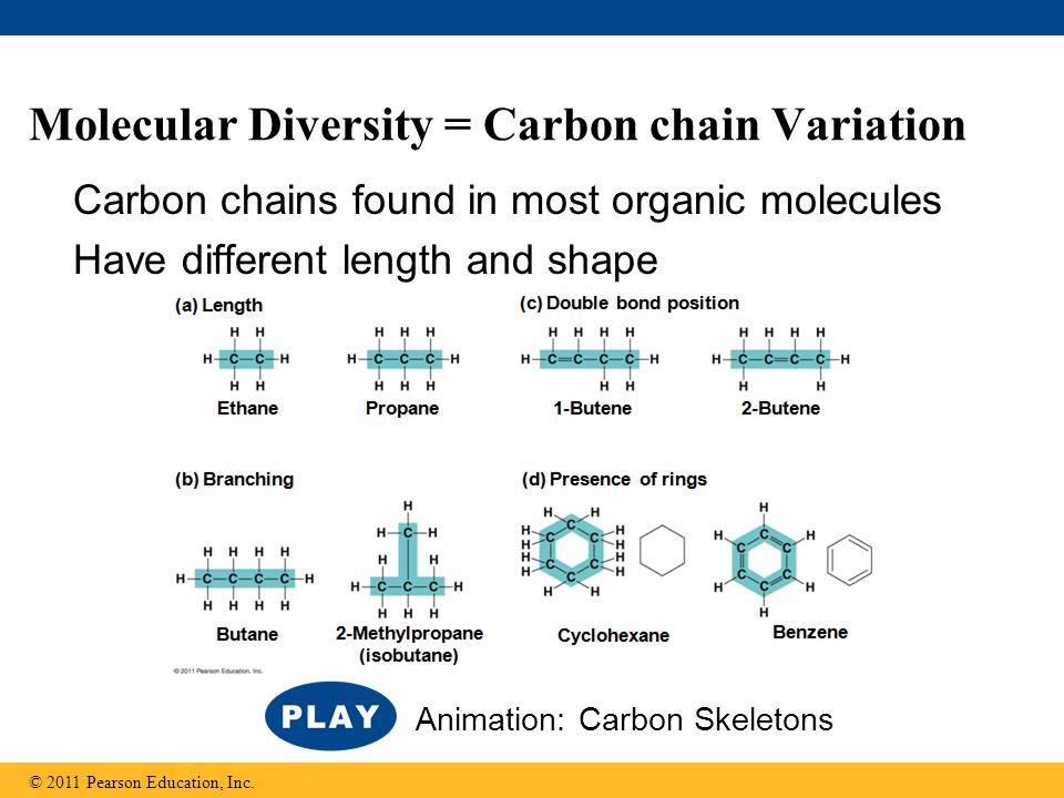 Molecular Diversity = Carbon chain Variation Carbon chains found in most organic molecules Have different length and shape © 2011 Pearson Education, Inc.