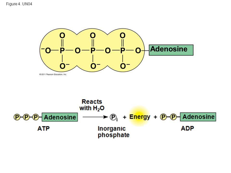 Figure 4. UN04 Adenosine