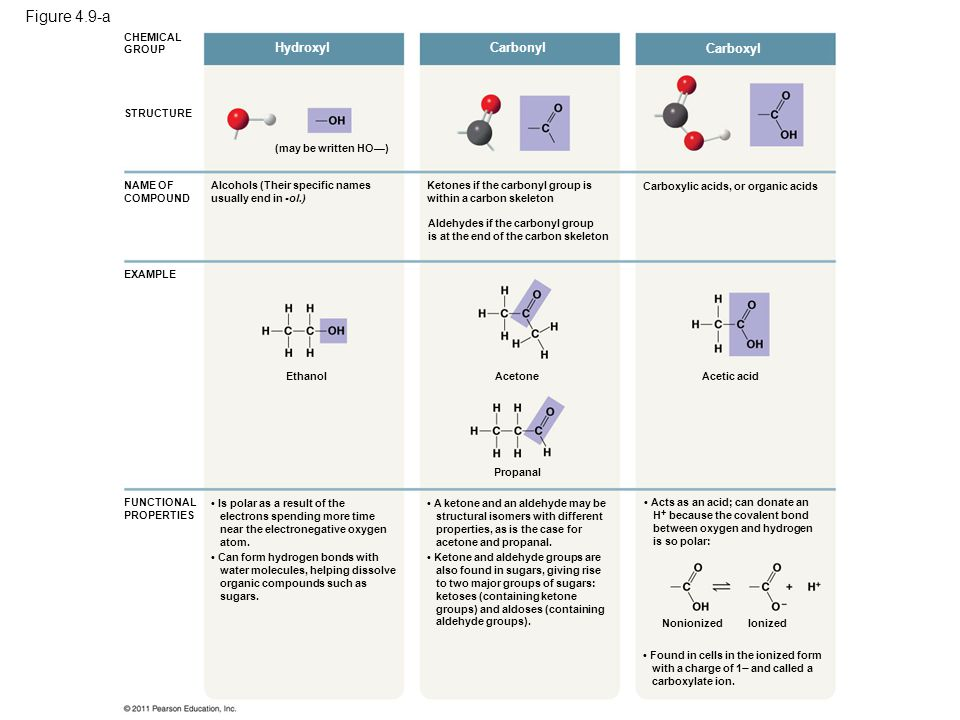 Figure 4.9-b AminoSulfhydrylPhosphateMethyl Methylated compounds Organic phosphates (may be written HS—) Thiols Amines Glycine Cysteine Acts as a base; can pick up an H + from the surrounding solution (water, in living organisms): NonionizedIonized Found in cells in the ionized form with a charge of 1+.