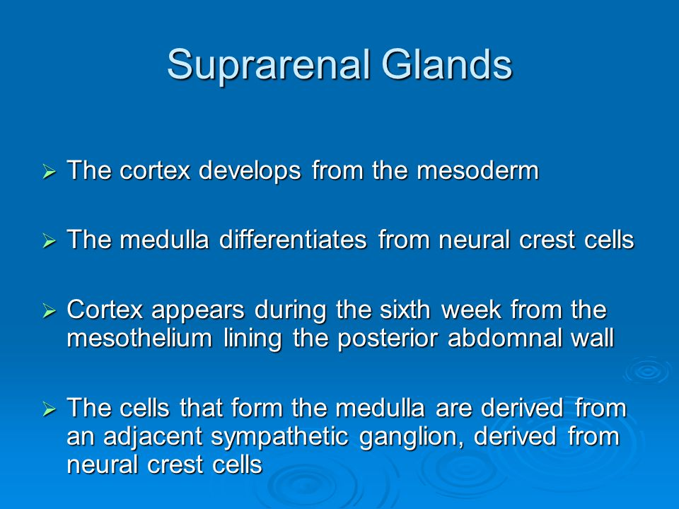 Suprarenal Glands  The cortex develops from the mesoderm  The medulla differentiates from neural crest cells  Cortex appears during the sixth week from the mesothelium lining the posterior abdomnal wall  The cells that form the medulla are derived from an adjacent sympathetic ganglion, derived from neural crest cells