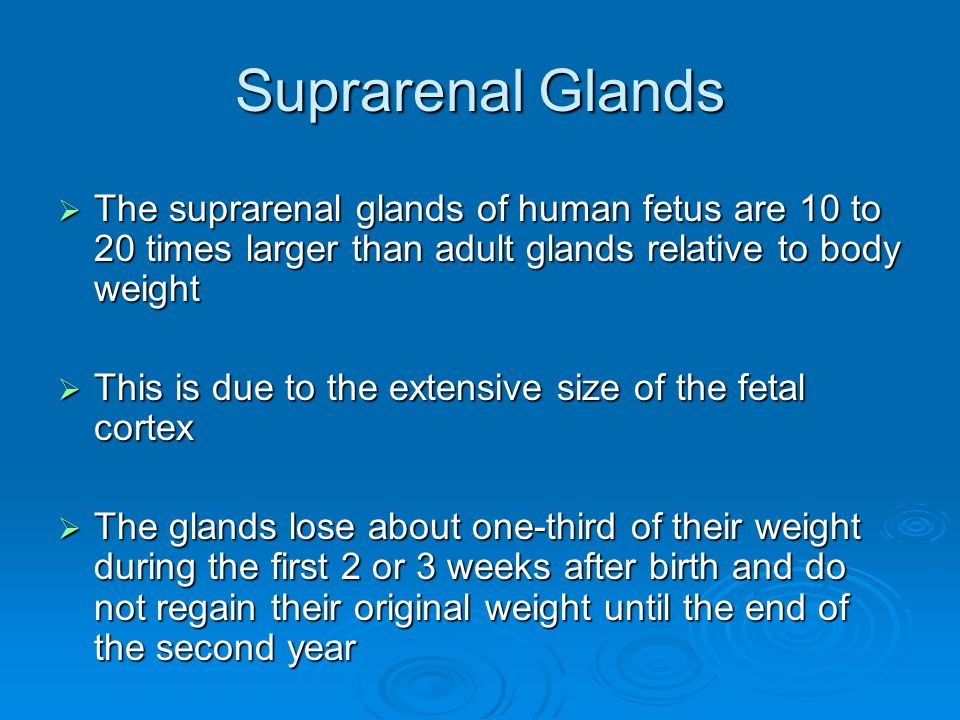 Suprarenal Glands  The suprarenal glands of human fetus are 10 to 20 times larger than adult glands relative to body weight  This is due to the extensive size of the fetal cortex  The glands lose about one-third of their weight during the first 2 or 3 weeks after birth and do not regain their original weight until the end of the second year