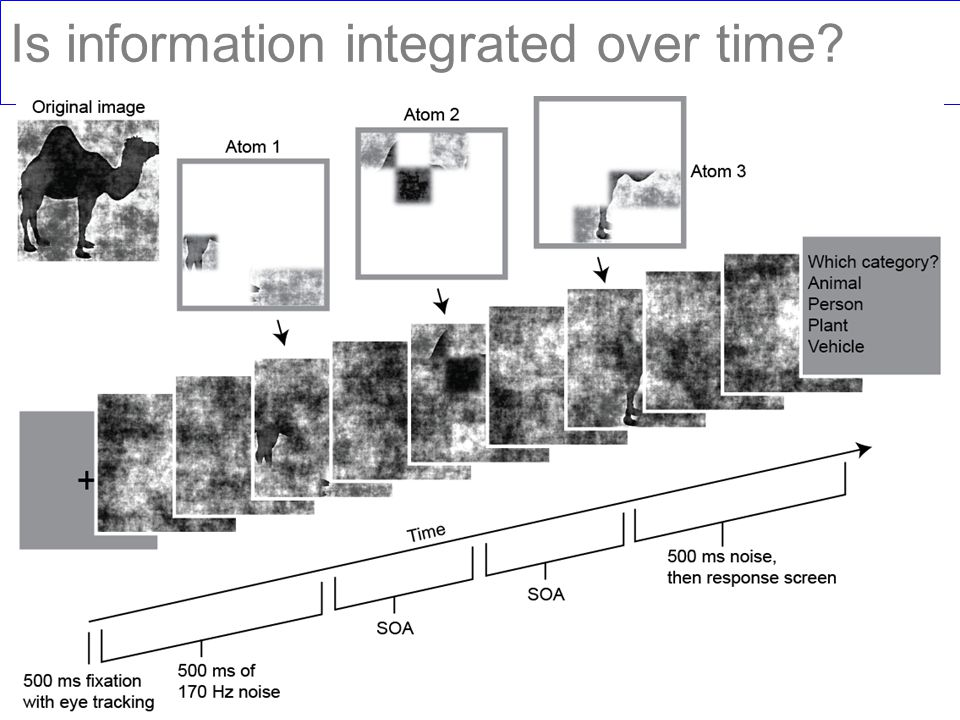 Is information integrated over time