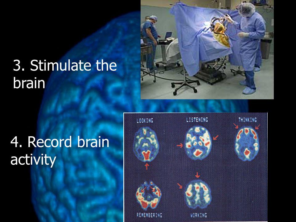 3. Stimulate the brain 4. Record brain activity