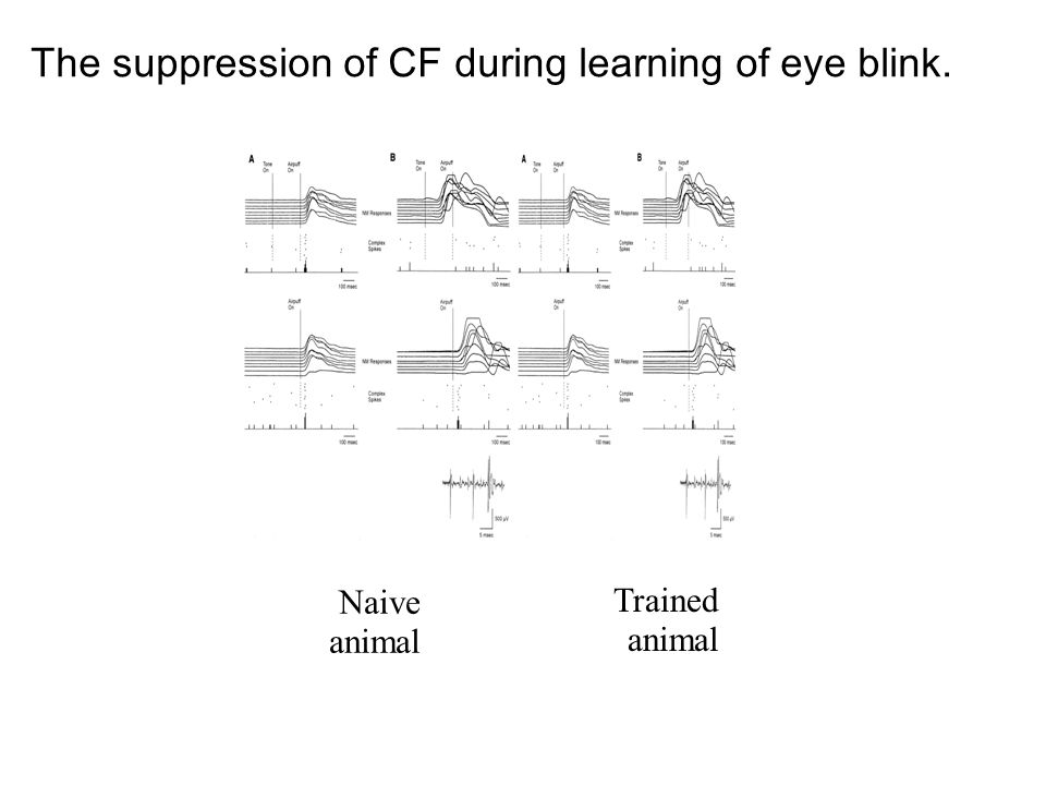 The suppression of CF during learning of eye blink. Naive animal Trained animal
