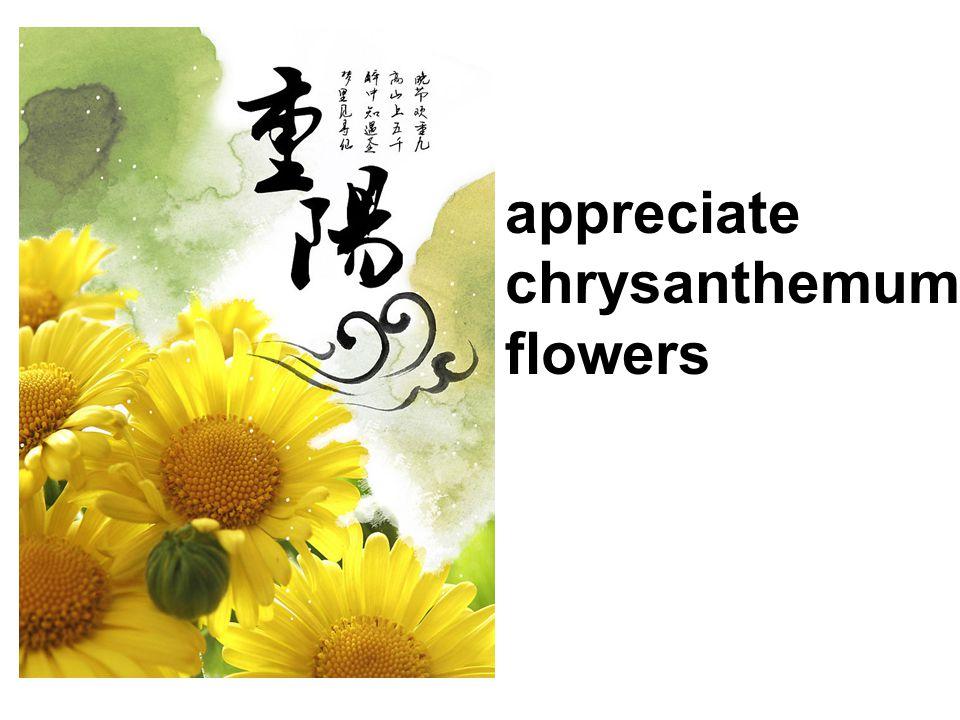 appreciate chrysanthemum flowers