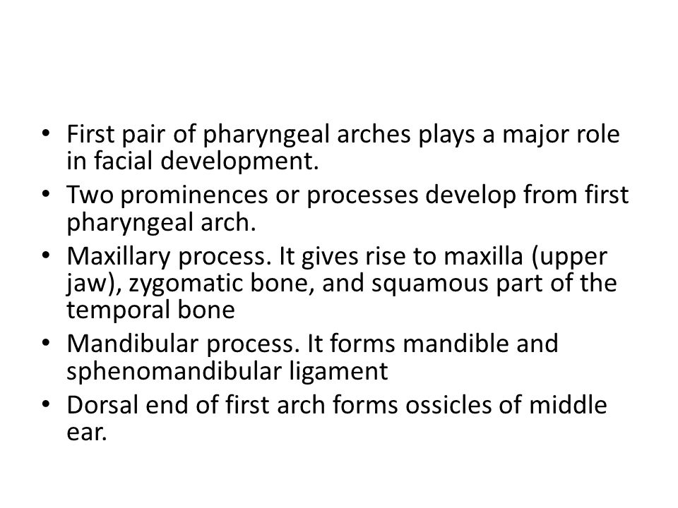 First pair of pharyngeal arches plays a major role in facial development. Two prominences or processes develop from first pharyngeal arch. Maxillary p