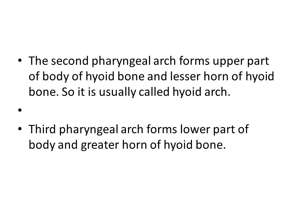 The second pharyngeal arch forms upper part of body of hyoid bone and lesser horn of hyoid bone. So it is usually called hyoid arch. Third pharyngeal
