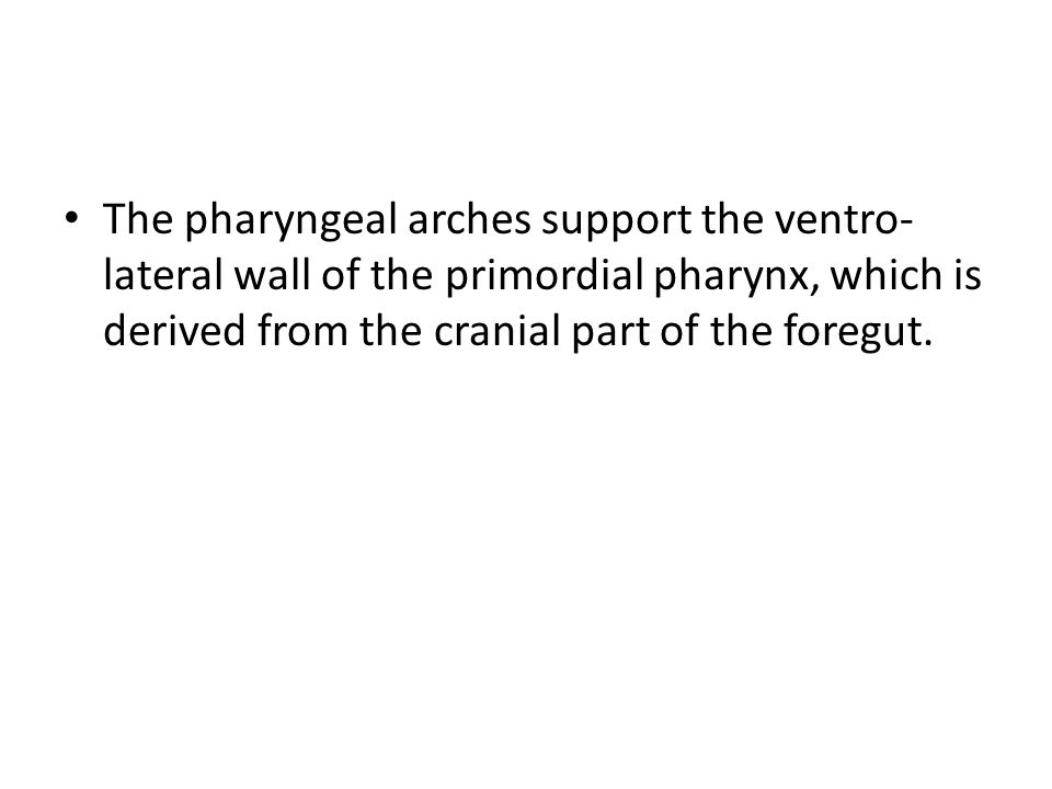 The pharyngeal arches support the ventro- lateral wall of the primordial pharynx, which is derived from the cranial part of the foregut.