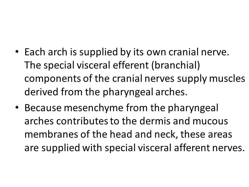 Each arch is supplied by its own cranial nerve. The special visceral efferent (branchial) components of the cranial nerves supply muscles derived from