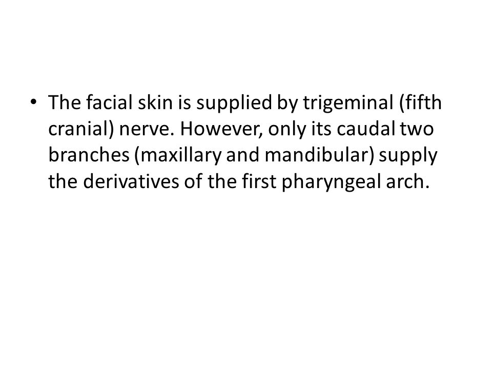 The facial skin is supplied by trigeminal (fifth cranial) nerve. However, only its caudal two branches (maxillary and mandibular) supply the derivativ