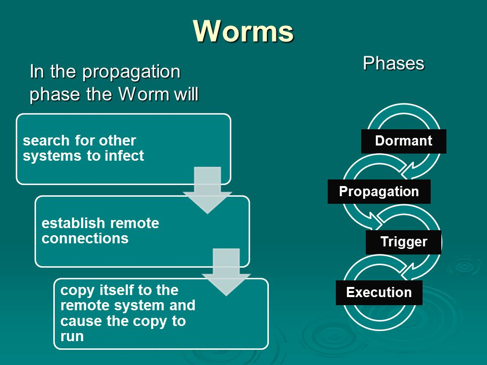 Worms In the propagation phase the Worm will Phases Phases Dormant Propagation Trigger Execution search for other systems to infect establish remote c