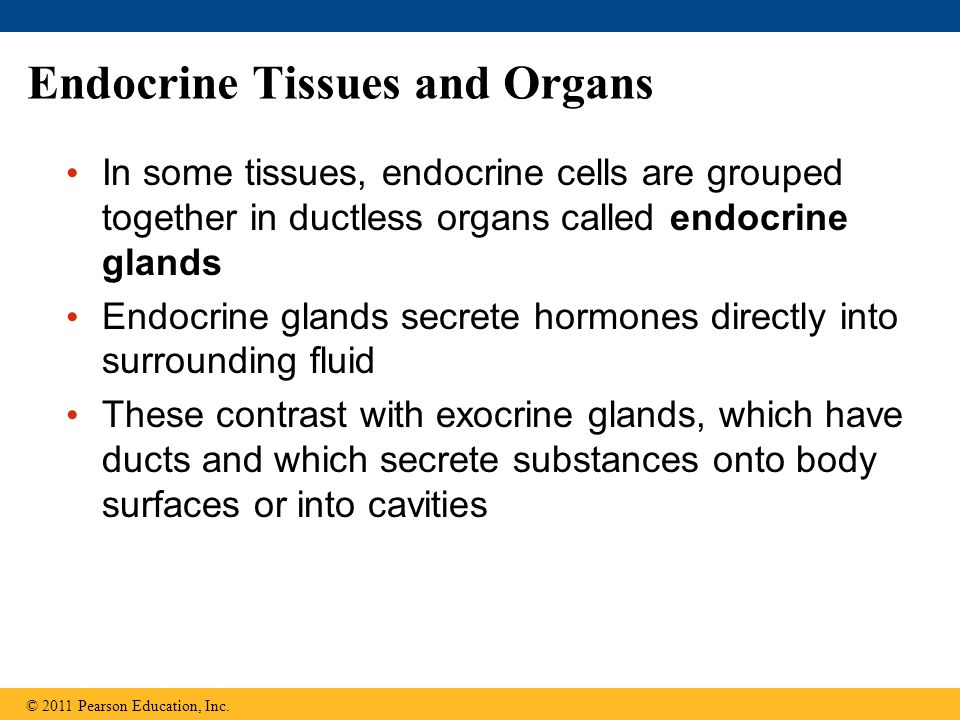 Endocrine Tissues and Organs In some tissues, endocrine cells are grouped together in ductless organs called endocrine glands Endocrine glands secrete