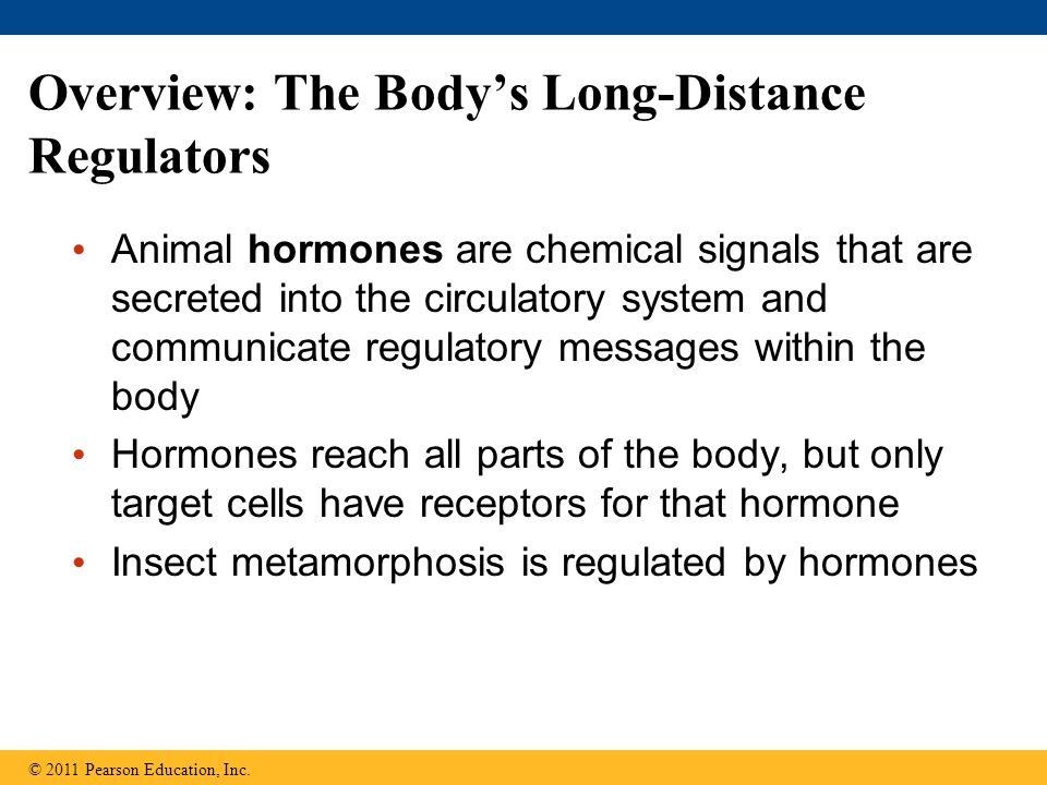 Overview: The Body's Long-Distance Regulators Animal hormones are chemical signals that are secreted into the circulatory system and communicate regul