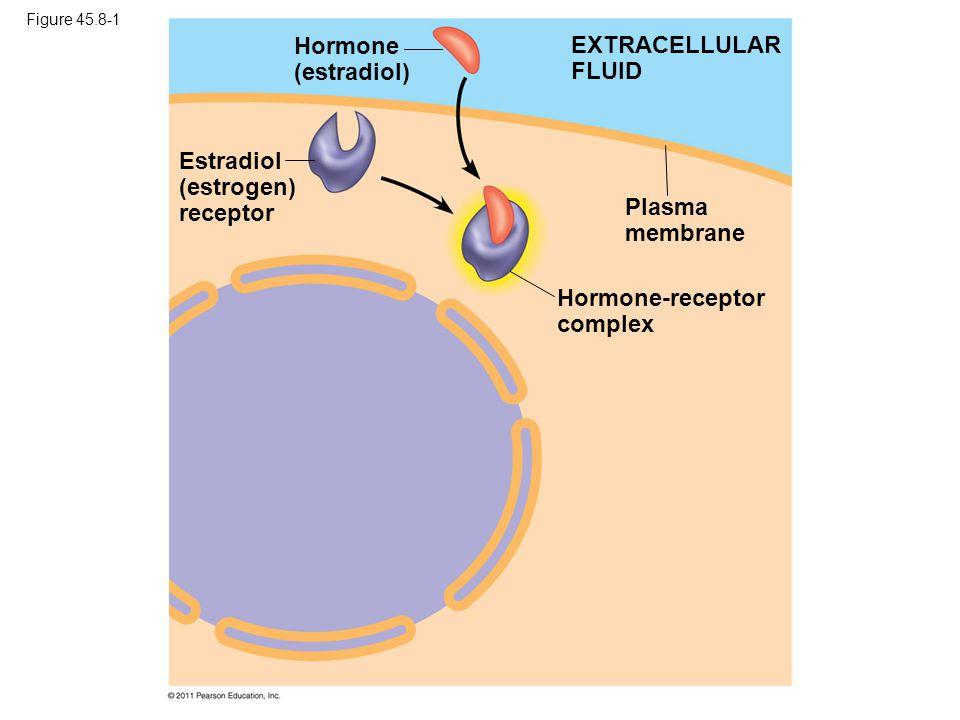 Figure 45.8-1 EXTRACELLULAR FLUID Hormone (estradiol) Estradiol (estrogen) receptor Plasma membrane Hormone-receptor complex