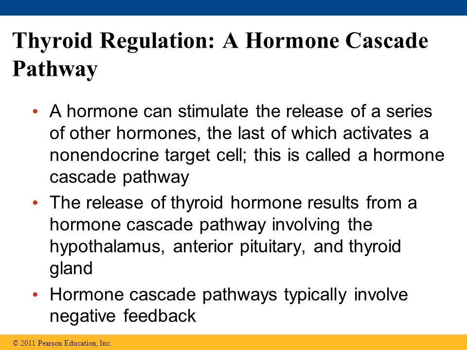Thyroid Regulation: A Hormone Cascade Pathway A hormone can stimulate the release of a series of other hormones, the last of which activates a nonendo
