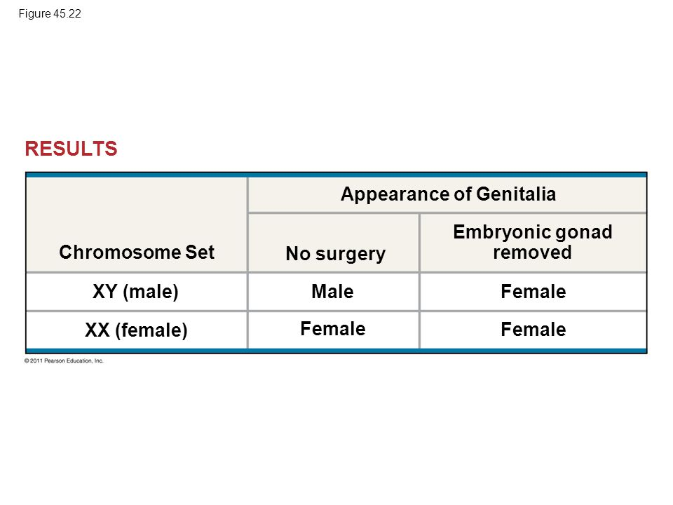 Chromosome Set Appearance of Genitalia No surgery Embryonic gonad removed XY (male) XX (female) Male Female RESULTS Figure 45.22