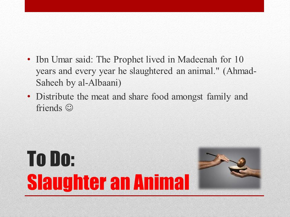 To Do: Slaughter an Animal Ibn Umar said: The Prophet lived in Madeenah for 10 years and every year he slaughtered an animal. (Ahmad- Saheeh by al-Albaani) Distribute the meat and share food amongst family and friends