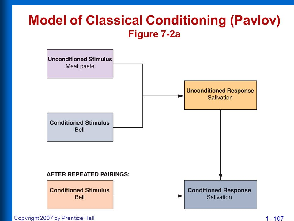 1 - 107 Copyright 2007 by Prentice Hall Model of Classical Conditioning (Pavlov) Figure 7-2a