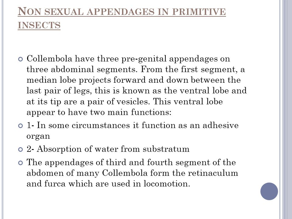 N ON SEXUAL APPENDAGES IN PRIMITIVE INSECTS Collembola have three pre-genital appendages on three abdominal segments. From the first segment, a median