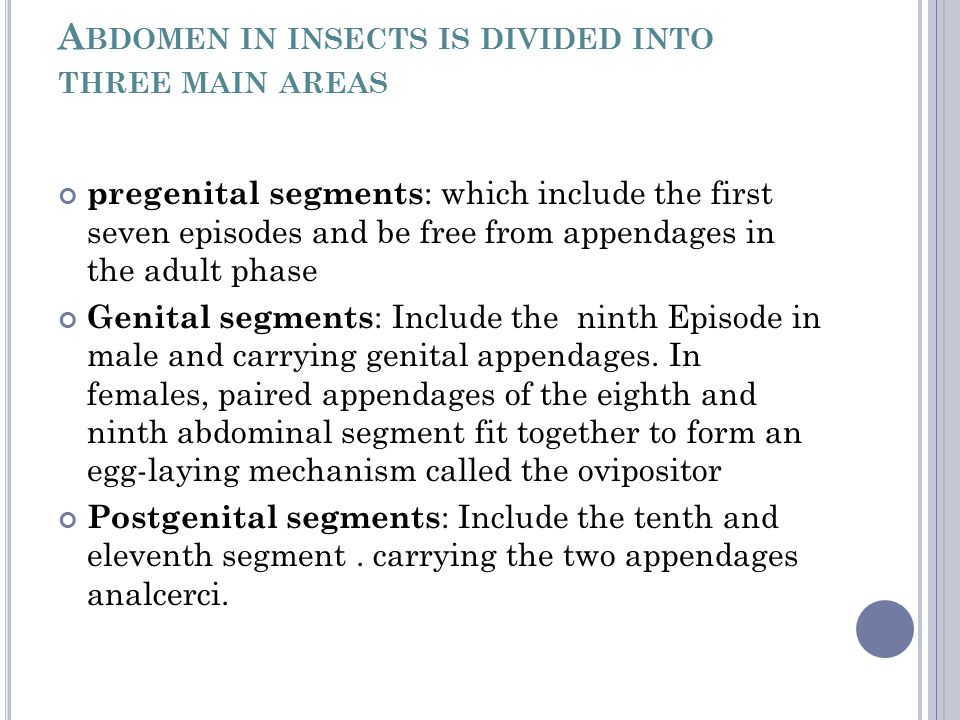 A BDOMEN IN INSECTS IS DIVIDED INTO THREE MAIN AREAS pregenital segments : which include the first seven episodes and be free from appendages in the a