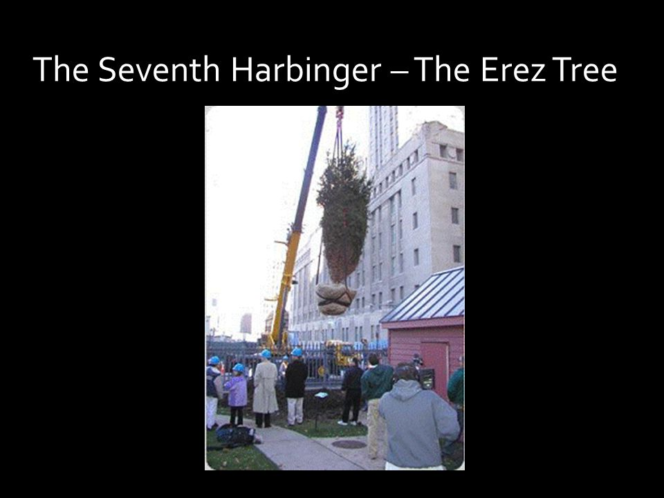 The Seventh Harbinger – The Erez Tree