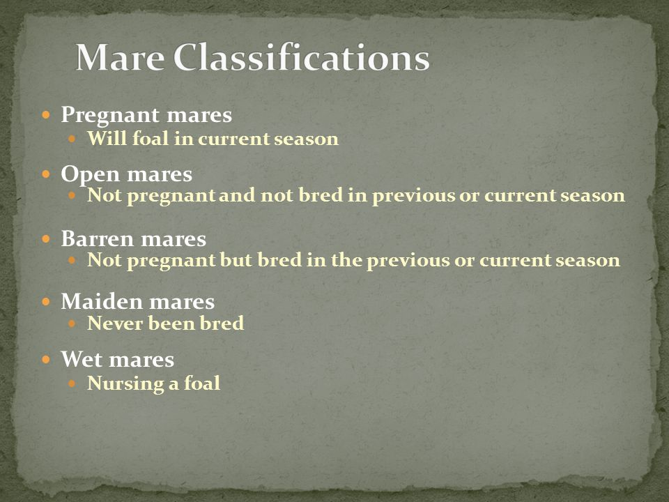 Pregnant mares Will foal in current season Open mares Not pregnant and not bred in previous or current season Barren mares Not pregnant but bred in the previous or current season Maiden mares Never been bred Wet mares Nursing a foal