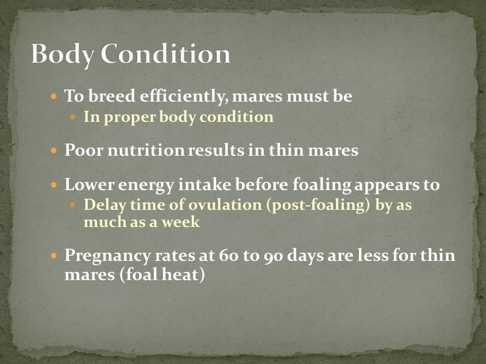 To breed efficiently, mares must be In proper body condition Poor nutrition results in thin mares Lower energy intake before foaling appears to Delay time of ovulation (post-foaling) by as much as a week Pregnancy rates at 60 to 90 days are less for thin mares (foal heat)