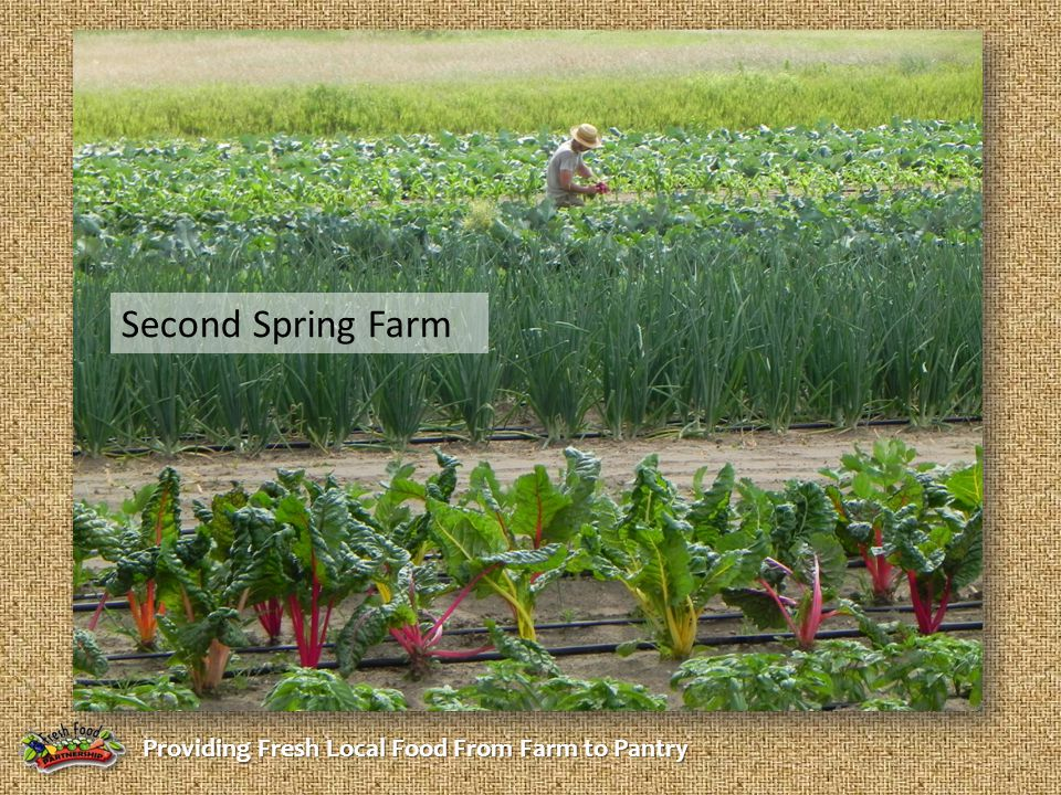 Providing Fresh Local Food From Farm to Pantry Second Spring Farm